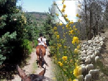 014-Balade-a-cheval